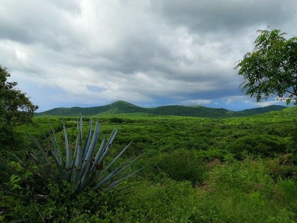La Meseta de es el área natural protegida más extensa de Sinaloa.
