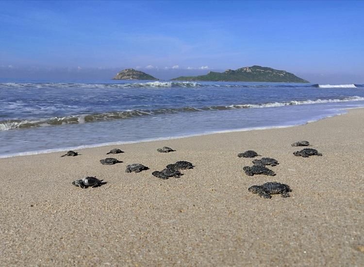 tortugas golfinas