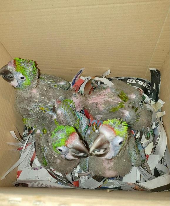 tráfico de fauna en México