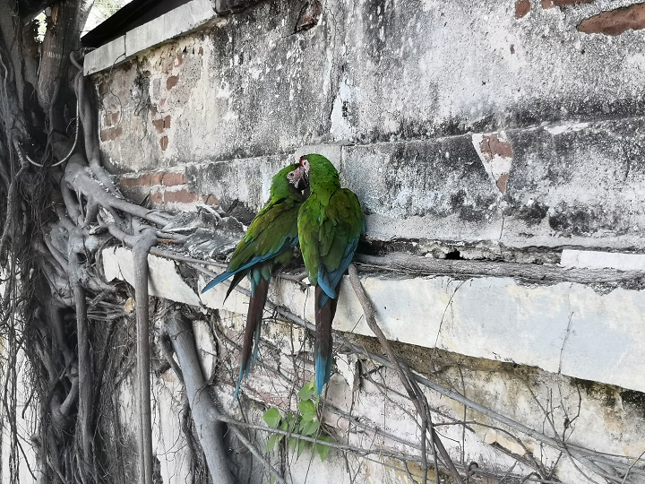 santuario de aves Mazatlán