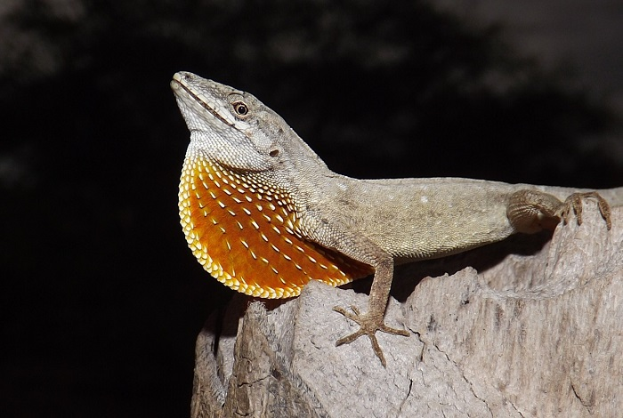 ranas, lagartijas y serpientes de Sinaloa