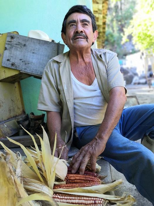 maíz criollo